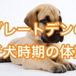 グレートデンの子犬の体重は3日で1kg増えるってほんと!?