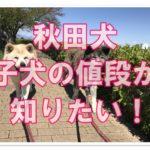 天然記念物に指定されている秋田犬!!気になる子犬の値段は!?