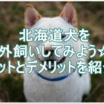 北海道犬は外飼いに向いてるの?メリットとデメリットを紹介!