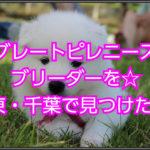 グレートピレニーズのブリーダー!関東・千葉で見つけました!