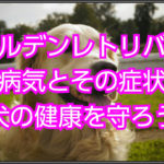 ゴールデンレトリバーの病気とその症状!!愛犬の健康を守る☆