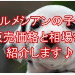 ダルメシアンの子犬を飼う!!販売価格と値段の相場をご紹介♪