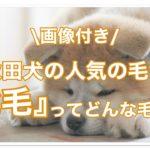 秋田犬の人気の毛色虎毛ってどんな毛色なの??画像付でご紹介