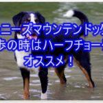 バーニーズマウンテンドッグ☆散歩はハーフチョークが良い!!