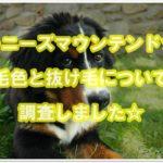 バーニースマウンテンドッグ☆毛色と抜け毛についてを調査!!