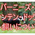 バーニーズ・マウンテン・ドッグの外飼いの疑問について★☆