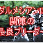 ダルメシアンのブリーダー☆関東の最良ブリーダーをご紹介★