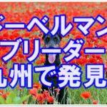 ドーベルマンの優良ブリーダーさん☆九州で見つけましたよ!!
