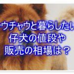 チャウチャウの子犬の値段や販売の相場はどれくらいなの☆??