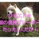 サモエドのブリーダー☆四国在住優良ブリーダーはたった1人!
