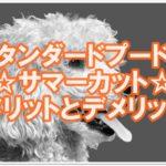 スタンダードプードル☆サマーカットのメリットとデメリット