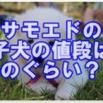 サモエドの子犬の値段は一体どのくらいなのかを調べました♪