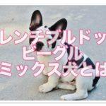 フレンチブルドックとビーグル☆のミックス犬とはどんな犬!?