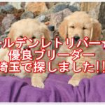 ゴールデンレトリバー☆の優良ブリーダー埼玉で探しました!!