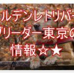 ゴールデンレトリバーのブリーダー東京★☆家族を迎えよう!!