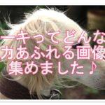 サルーキってどんな犬なの??魅力あふれる画像を集めました♪