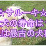 サルーキ☆愛犬の寿命と末永く一緒に健康に暮らす秘訣とは!?
