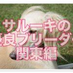 あのかっこいいサルーキの優良ブリーダーのご紹介♪in関東!!