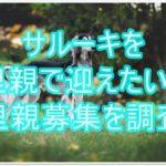 すらりと気品あふれるサルーキ★☆里親募集を調査しました!!