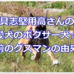 具志堅用高さんの愛犬のボクサー犬☆名前のグスマンの由来?!
