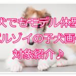 ボルゾイは子犬の時からモデルさん!?子犬画像を紹介します!!