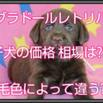 ラブラドールレトリバーの子犬の価格相場とは??毛色で違う??