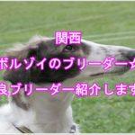 ボルゾイブリーダー関西地方編!出張可能なブリーダーを紹介!