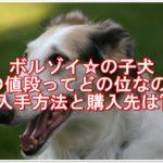 ボルゾイの子犬の値段ってどの位なのか?入手方法と販売先は?