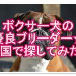 ボクサー犬のブリーダー!全国で優良ブリーダーを探しました!