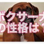 ボクサー犬はどんな性格なのかな!?詳しく解説していきます!!