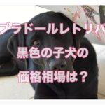 ラブラドールレトリバー☆黒色の子犬の価格相場が気になる