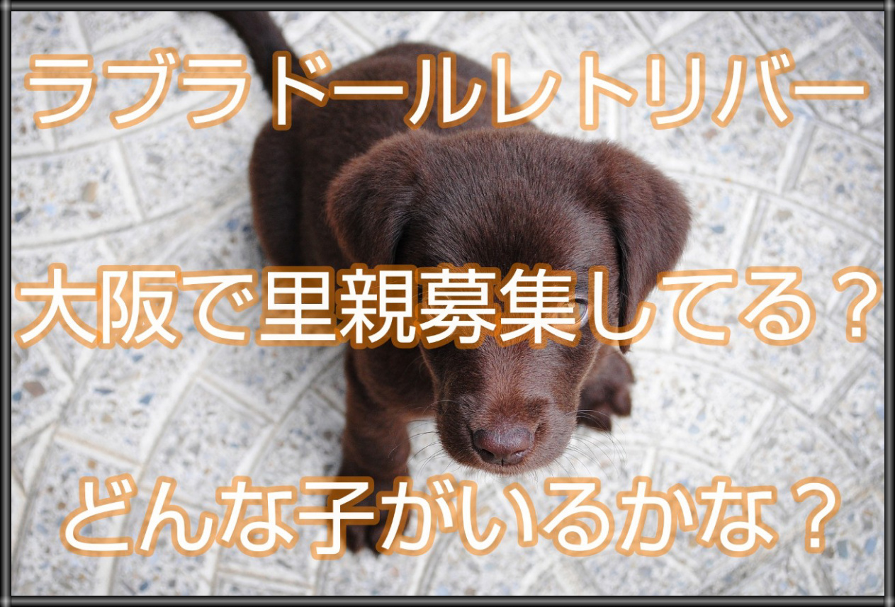 子犬 ゴールデン 無料 募集 レトリバー 里親 神奈川県のゴールデンレトリーバーの里親募集&迷子情報|ペットの命