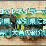 ロットワイラー専門犬舎☆岐阜県・愛知県にある犬舎を紹介!!