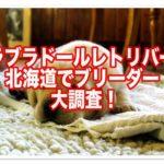 ラブラドールレトリバーのブリーダー☆子犬を北海道で探す!!