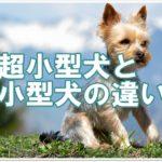 超小型犬と小型犬の違い!!超小型犬を区分するのは体重だった!?