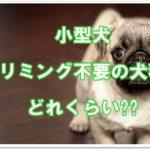 小型犬でトリミング不要の犬種はどれくらい??被毛の特徴を紹介!!