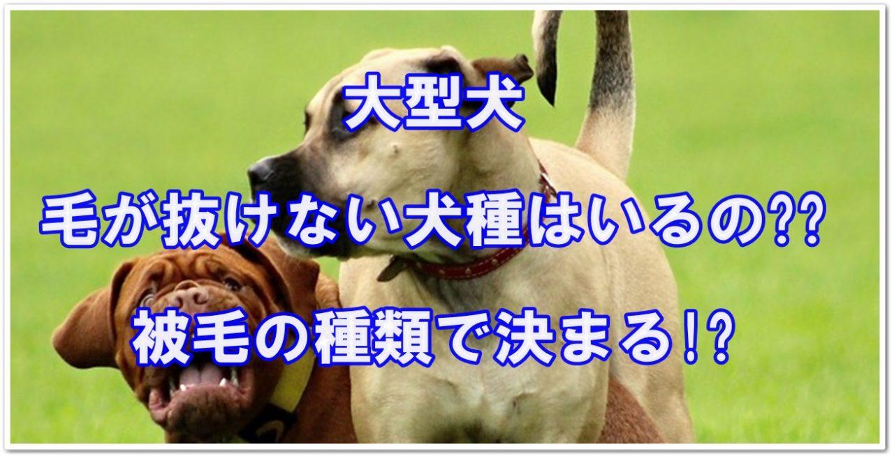 種 にくい の 毛 抜け 犬