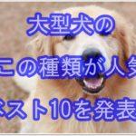 大型犬ナンバー1はどの種類??人気ベスト10を画像と共に発表!!
