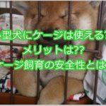 小型犬のケージ飼育にメリットはある??ケージ飼いの安全性を見る!!