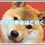 中型犬の平均寿命はだいたい何年ぐらい??長生きの秘訣も調査!!