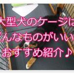 大型犬のケージは室内飼いには必須!!種類や作り方を紹介!!