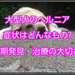 大型犬のヘルニアの症状はどんなもの?愛犬の様子を見て早期発見する!