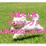 令和元年最新小型犬人気ランキング!!今人気なのはこの子だ!!