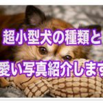 超小型犬の種類ってそんなにいるの!?可愛い写真をご紹介します!!