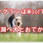 ドッグランで遊ぶならWoofで決まり!山中湖へ犬と一緒におでかけ!