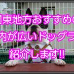 【ドッグラン関東】おすすめの室内ドッグラン!!広い場所で楽しもう!!