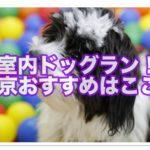 ドッグランに行きたい!!東京でおすすめはココ!!室内で愛犬と快適に