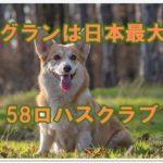ドッグランは日本最大級!?58ロハスクラブで愛犬と解放感を味わう!!