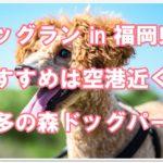 ドッグランin福岡県☆おすすめは空港近く!!博多の森ドッグパーク
