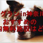 ドッグランin神奈川県!雨でも安心なおすすめの室内無料施設はどこ?